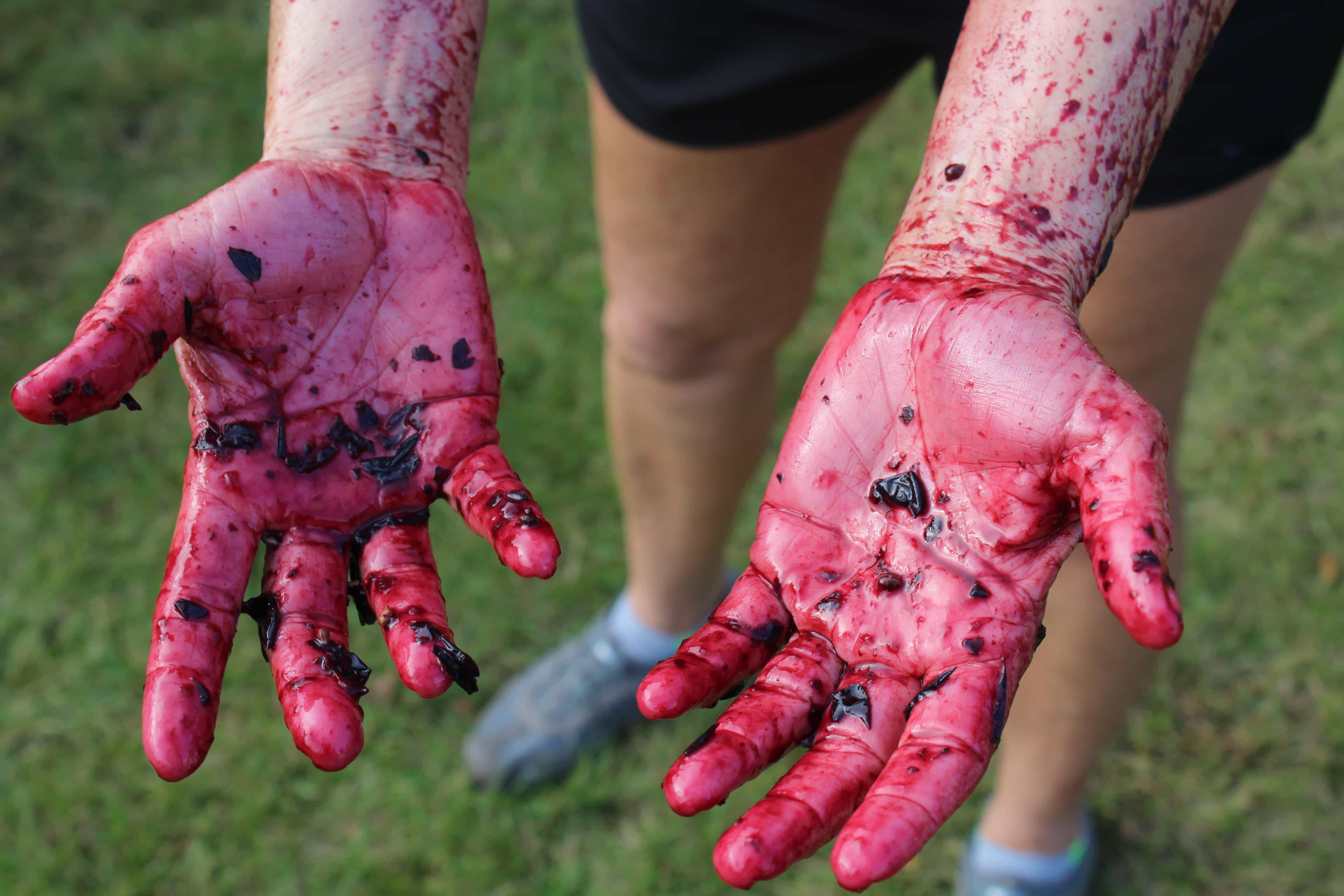 The Aftermath from a Grape Stomp