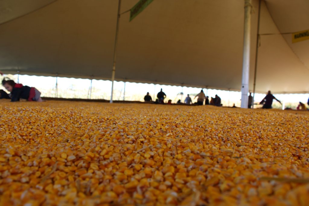 Corn Pit at the Twin Cities Harvest Festival and Corn Maze in Brooklyn Park MN