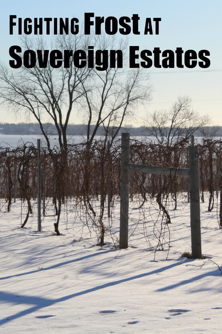 Fighting Frost at Sovereign Estates Winery and Vineyard in MN. Some of the best wine near the Twin Cities can be found here! Click to find out more.