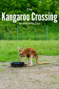 our kids will love the Kangaroo Crossing this summer. Check it out at the Minnesota Zoo this summer only!
