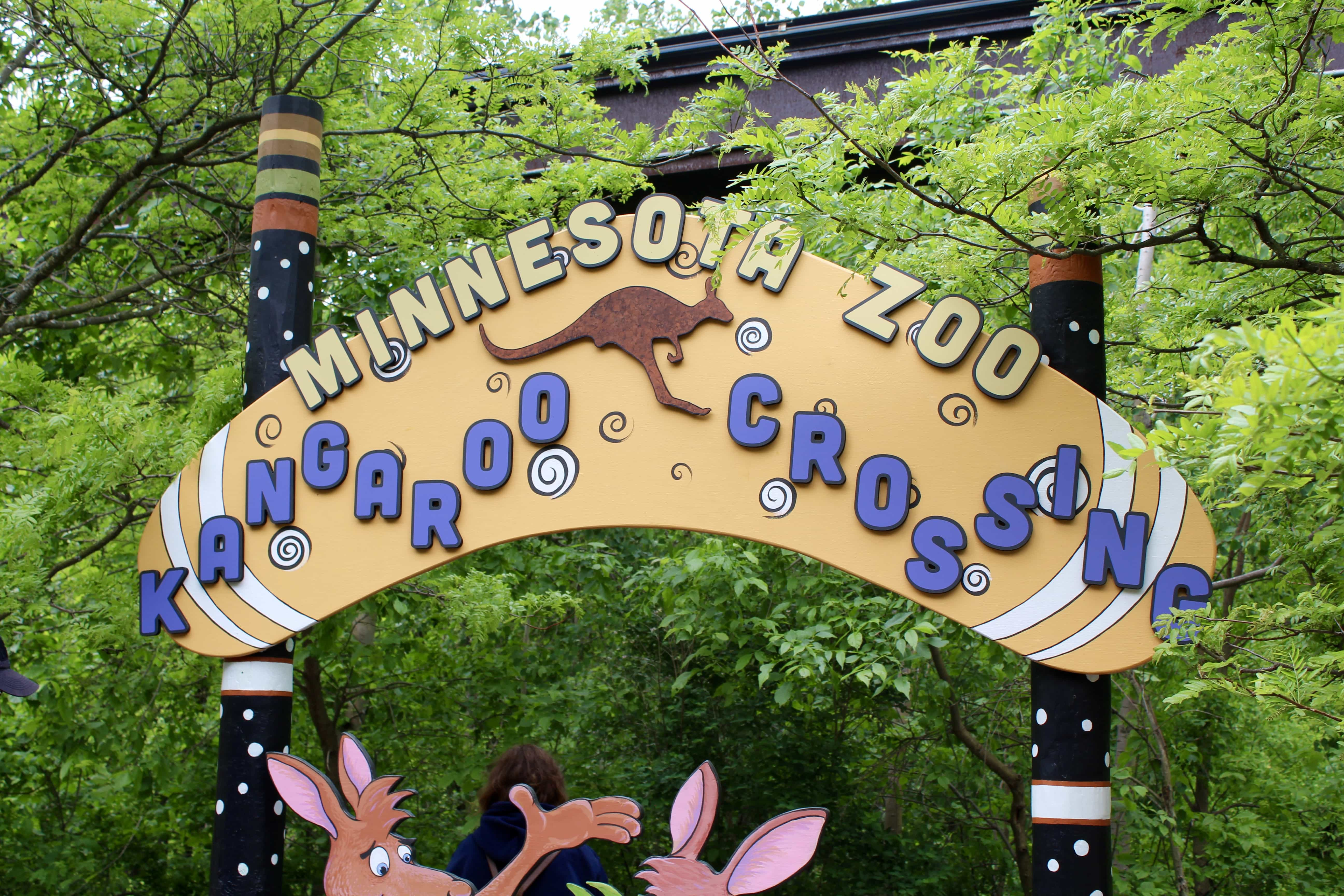 Kangaroo Crossing at the MN Zoo | Into the Outback
