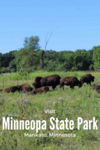 With so much do to, not knowing what to do first is part of the problem with Minneopa State Park in Mankato. Between the camping, hiking, waterfalls and bison trail, find out how to see it all.