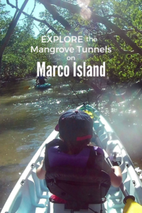 Kayaking the Mangroves with Paddle Marco in Florida