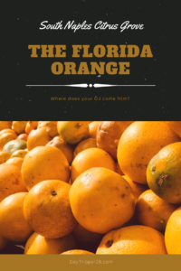 Finding out where to get her freshest OJ in Florida. #FloridaOrange #NaplesFlorida