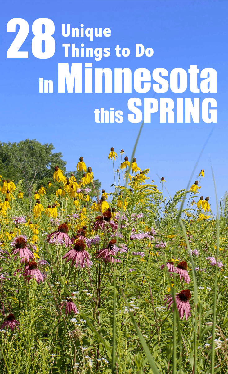 Spring in Minneapolis is filled with adventure. Check out these unique things to do in Minnesota now. #Familyfun Spring Time | Minnesota | Twin Cities | Things to do in the Twin Cities