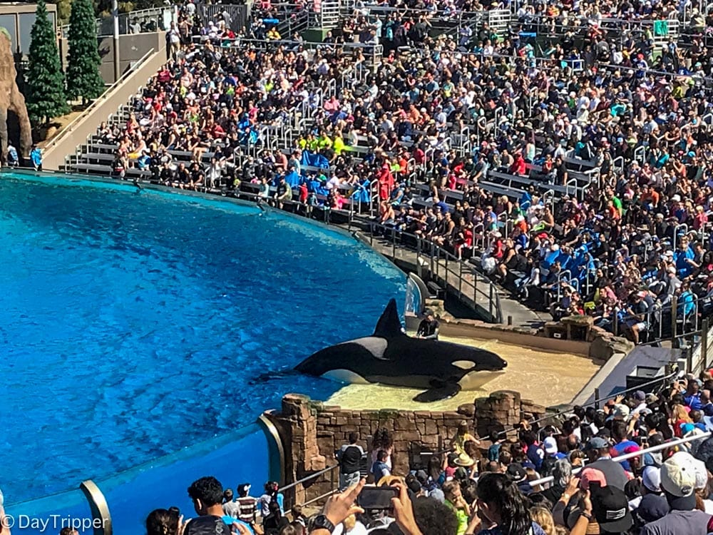 Seaworld Tips And Tricks Why No One Talks About It Anymore
