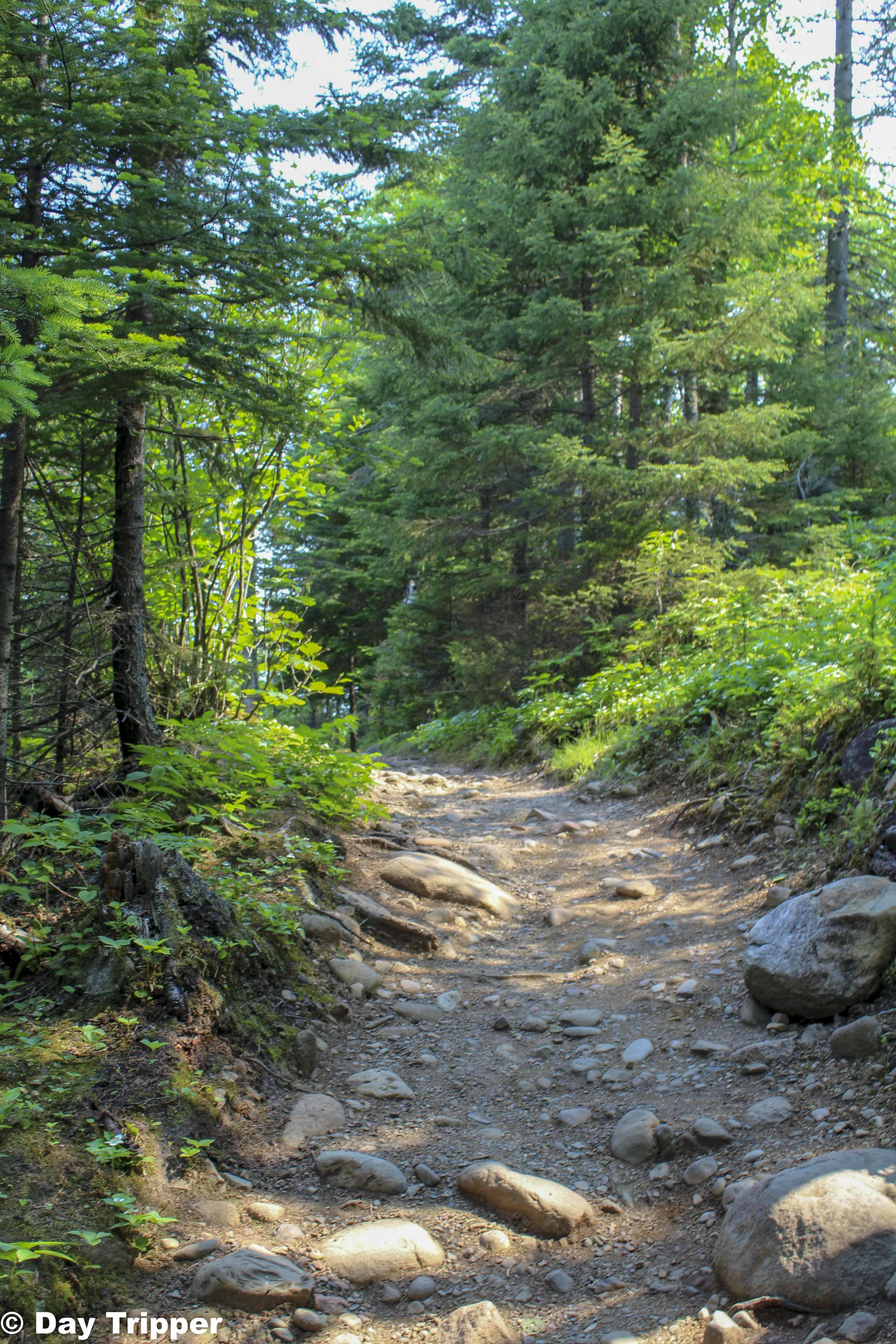 Hiking Trail at Judge Magney State Park